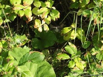 Кошак в засаде