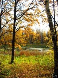 Любимое болото8586