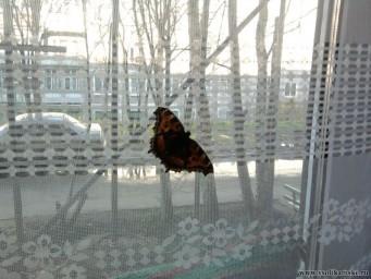 Бабочка в октябре...