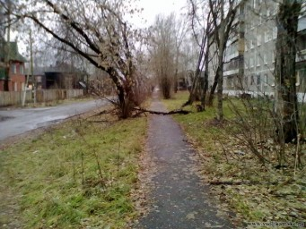 Вид на лежащее дерево на тротуаре(Улица Коммунаров)