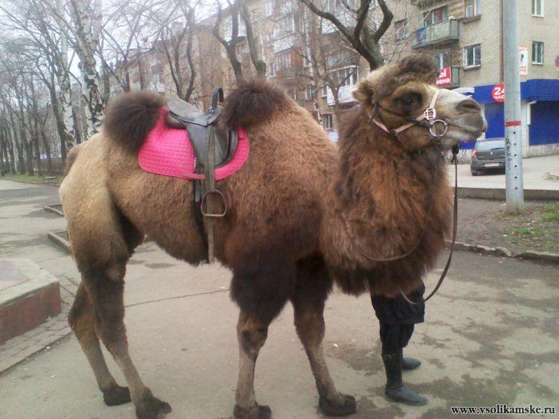 На улицах Перми