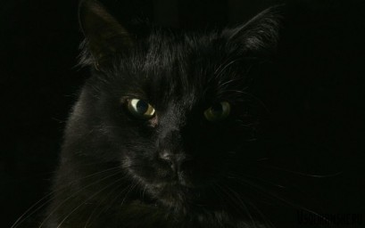 hellowin-black-cat-08_meantux_nc.jpg