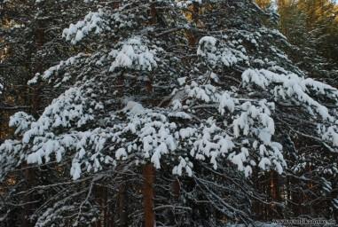 Зима не думает сдаваться12439