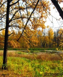 Любимое болото8589