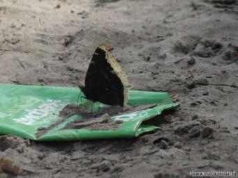 Бабочки ЗА здоровый образ жизни!