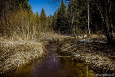 Лесной ручей...