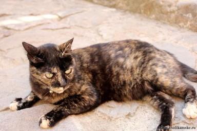 Испанская кошка