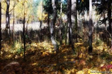 Осенний...