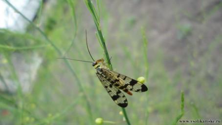 гг с клювом насекомое