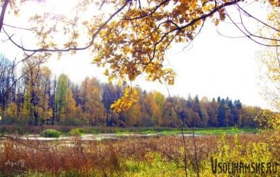 Любимое болото8587