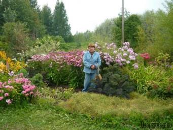 Цветущий кустарник.