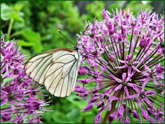 Летние радости. Поцелуй бабочки