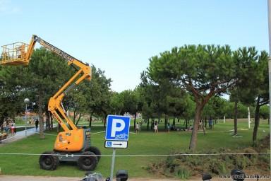 Испанская обрезка деревьев