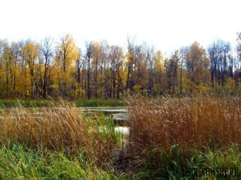 Любимое болото8588