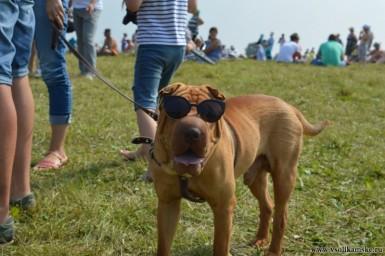 Крутая собака