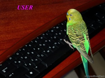 мой User