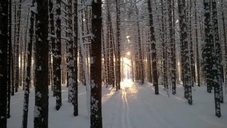 Лыжня...